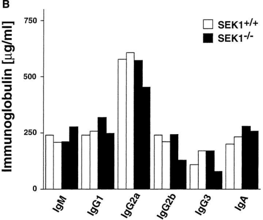 B cell activation and immunoglobulin production in SEK1−/−  mice. (A) Activation of splenic B cells. Purified splenic B cells (105/well)  from SEK1−/− (shaded bars) and SEK1+/+ (open bars) control mice were  seeded in medium containing no added stimulus (Control), soluble anti-Igμ Ab (10 μg/ml, clone B76), IL-4 (10 U/ml), soluble anti-CD40 (1  μg/ml), IL-4 (10 U/ml) plus soluble anti-CD40 (1 μg/ml), and 10 μg/ml  LPS (LPS). After 24 h, the cells were pulsed for 12 h with 1 μCi [3H]thymidine/well. The experiment shown is one of four experiments in which  conditions for stimulation varied (time, cell concentration, concentration  of activators). No significant differences (Student's t test; p > 0.05) were  observed in the [3H]thymidine uptake between SEK1−/− and SEK1+/+ B  cells in response to any of these conditions. [3H]thymidine uptake is  shown in cpm ± SD. (B) SEK1−/− mice produce normal levels of serum  immunoglobulin subclasses. Sera were collected from two individual  6-wk-old SEK1−/− (shaded bars) and two individual 6-wk-old SEK1+/+  (open bars) chimeric mice. The concentrations of Ig subclasses are shown  in μg/ml and were determined by ELISA. Standard deviations were <25  μg/ml.