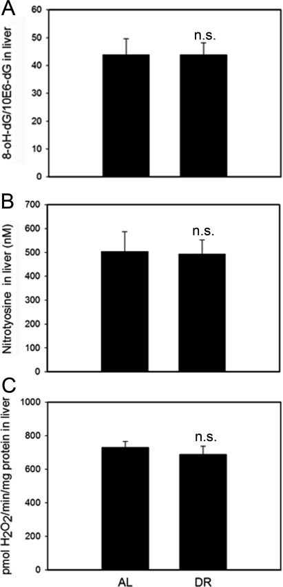 DR does not change oxidative damage markers measured in whole liver homogenates.(A) 8-oxodG levels in liver homogenates from AL and DR mice measured by HPLC with electrochemical detection. n=9 animals/group. (B) Nitrotyrosine levels in liver homogenates from AL and DR mice measured by ELISA; n=6 animals/ group. (C) Steady state hydrogen peroxide release from liver homogenates from AL and DR mice measured by Amplex Red fluorimetry; n=12 animals/ group. All data are mean ±S.E.M.; n.s.: not significant (T-test).