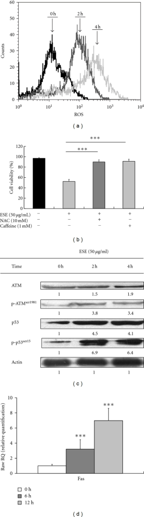 ESE increased ROS production and contributed to p53-correlated ATM/Fas apoptotic signaling in HCT 116 cells. (a) Treatment with ESE (50 μg/mL) for the indicated times (0, 2, and 4 h) was subjected to ROS productions by flow cytometry as described in Section 2. (b) Pretreatment with NAC (10 mM, a scavenger of ROS), or caffeine (1 mM, an inhibitor of ATM) in ESE-treated HCT 116 cells restored the cell viability by MTT assay. The values presented are the mean ± S.D. (n = 3) from three independent experiments. ***P < 0.001 shows a significant different when compared to ESE treatment. (c) ESE elevated the protein levels of ATM, phosphorylated ATM (Ser1981), p53, phosphorylation, and p53 (Ser15) by Western blotting. (d) Effects of ESE on Fas mRNA level in HCT 116 cells, and the total RNA was extracted from each treatment of ESE (50 μg/mL) on HCT 116 cells for 0, 6, and 12 h. RNA samples were reverse transcribed into cDNA and quantified with real-time PCR as described in Section 2. The ratios of Fas mRNA/GAPDH are presented. The values presented are the mean ± S.D. (n = 3) from three independent experiments. ***P < 0.001 shows a significant different when compared to control (0 h) sample.