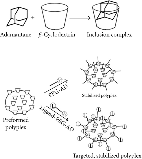 Formation of inclusion complexes between adamantane (AD) and β-cyclodextrin allows straightforward, noncovalent incorporation of stabilizing (via PEG-AD conjugates) and/or targeting (via ligand-PEG-AD conjugates) components to a polymer-nucleic acid nanoparticles (polyplex) (Figure from [21]).