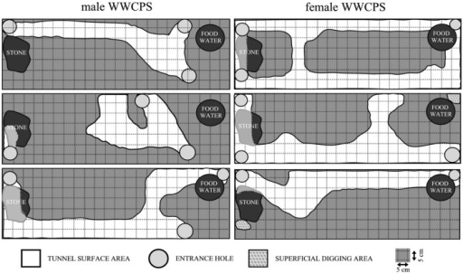 Diagram Showing Tunnels And Burrows Dug By Wild Wwcps R Open I