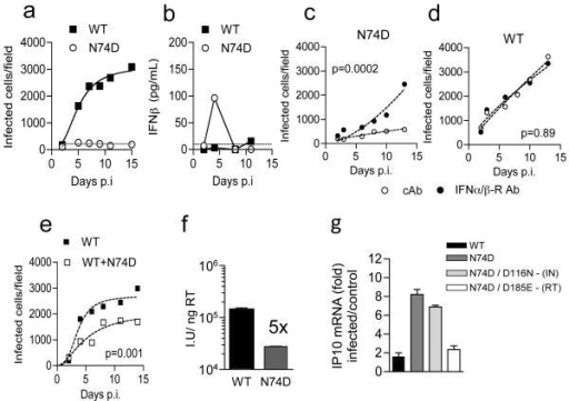 HIV-1 CPSF6 binding mutant CA N74D is restricted in MDM due to induction of Type-I IFN(a) Replication of WT HIV-1 or CA mutant N74D in MDM. (b) IFN-β levels in supernatants from (a). (c-d) Replication of HIV-1 CA N74D or WT HIV-1 with IFNAR2 or control antibody (cAb). (e) Replication of WT or WT plus CA N74D. Mean data and regression lines for biological replicates are shown in c-e. P values (2-way ANOVA) are given for (c-d) IFNAR2 blockade and (e) co-infection with CA mutant N74D. (f) Infection of MDM by HIV-1 measured at 48h (g) GAPDH normalized IP10 RNA levels expressed as fold change over untreated cells after infection with WT or HIV-1 mutants (Mean of 3 technical replicates ±SEM, f-g).