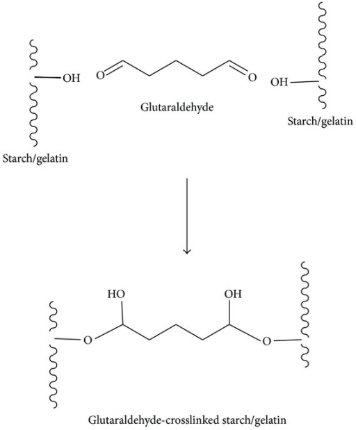 Possible crosslinking reaction of starch and gelatin by glutaraldehyde.