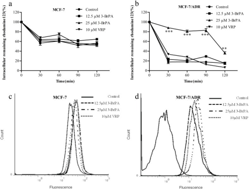 Inhibition of Rh123 efflux from MCF-7/ADR cells by 3-BrPA and VRP. 3-BrPA and VRP increase the accumulation of EPI in cells.a,b: After incubation 1 h in the presence of Rh123 (5 µM) and 3-BrPA (12.5, 25 µM) and VRP (10 µM),the cells were washed and incubated in fresh medium for indicated times. Each point represents the mean ± SD (n = 6). Each experiment was performed three times. c,d: These cells were incubated with 3-BrPA (12.5, 25 µM) at 37°C for 4 h, then 10 µM EPI was added for another 1 h incubation. Intracellular fluorescence was analyzed by flow cytometry. Control cells that were not exposed to any 3-BrPA, and VRP (10 µM) were used as positive control. The change of intracellular fluorescence in MCF-7 and MCF-7/ADR ***P<0.01 compared with the control.