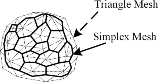 Relationship between simplex mesh and virtual triangle mesh.