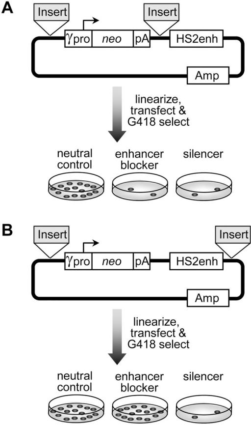 Schema For Drug Resistant Colony Assaya Enhancer Blo Open I