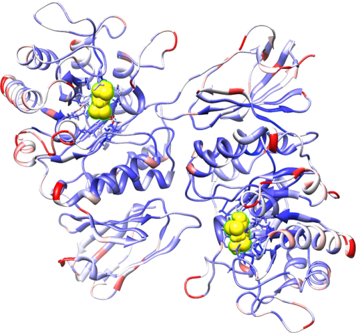 Crystal structure of AGAL (3GXT) in complex with DGJ (yellow). The structure was colored by RMSF ranging from blue (low flexibility) to white (medium flexibility) to red (high flexibility).