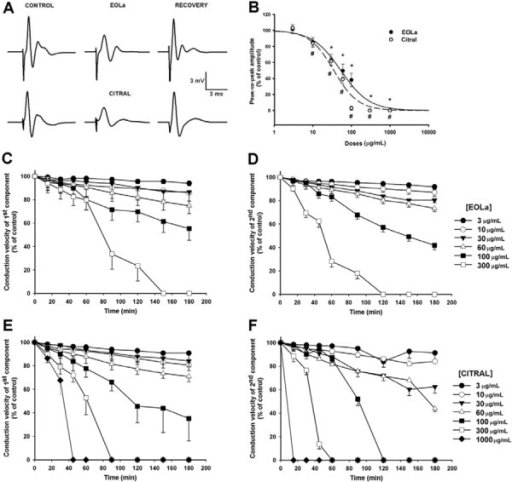 Representative traces and data of rat sciatic nerve compound action potentials(CAP) in control, essential oil of Lippia alba (EOLa) and citralgroups. Panel A: left traces indicate CAP in control group;center traces indicate nerve exposed to 60 µg/mL EOLa and 60 µg/mL citral; andright traces indicate the recovery period. Concentration-dependent curves for EOLaand citral on peak-to-peak amplitude of CAP are shown in panel B.Panels C and D show the time course ofconduction velocities of the first and second CAP components upon exposure toEOLa. Panels E and F show the effects of citralon conduction velocity time course. P<0.05, *EOLa and #citralcompared to control (ANOVA or paired t-test).