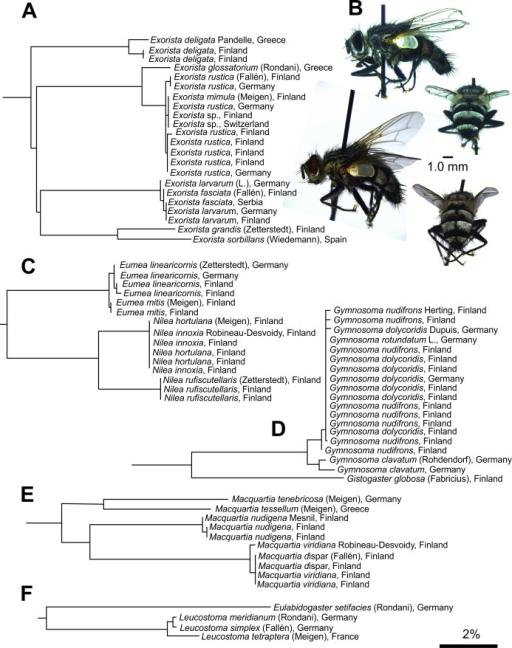 Examples Of Species Or Species Complexes With Poor Bin Open I