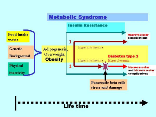 The relationship between metabolic syndrome, insulin resistance, hyperinsulinemia and hyperglycemia (overt type 2 diabetes). An insulin-resistant state following nuclear peroxisome proliferator activated receptors (PPAR) deactivation is the key phase of metabolic syndrome initiation. Afterwards, there are 2 principal pathways of metabolic syndrome development: 1) With preserved pancreatic beta cells function and insulin hypersecretion which can compensate for insulin resistance. This pathway leads mainly to the macrovascular complications of metabolic syndrome; 2) With massive damage of pancreatic beta cells leading to progressively decrease of insulin secretion and to hyperglycemia (e.g. overt type 2 diabetes). This pathway leads both to microvascular and macrovascular complications. Time-related scheme.