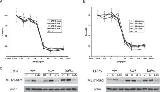 In Vitro Treatment of Embryonic Fibroblasts from LRP5- and LRP6-Deficient Mice with PA Plus FP59 or LF(A) To assess the effects of LRP5 or LRP6 deficiency upon LeTx-sensitivity in vitro, embryonic fibroblasts from LRP5 and LRP6 parental (+/+), heterozygous (ko/+), and izygous (ko/ko) mice were treated with PA (1 ug/ml) and FP59 (20 pg/ml–2 ug/ml). Cell viability (oordinate) at the end of 24 h of incubation is plotted versus the concentration of FP59 (abcissa). Error bars indicate standard deviation between three replicates in a single experiment.(B) Alternatively, embryonic fibroblasts from the same mice were treated with FP59 (1 ng/ml) and PA (1 pg/ml–10 ug/ml). Cell viability (oordinate) at the end of 24 h of incubation is plotted versus the concentration of PA (abcissa). Error bars indicate standard deviation between three replicates in a single experiment. This plot is representative of three independent experiments.(C) As an independent indicator of PA entry into embryonic fibroblasts derived from mice with targeted deletions of LRP5 (upper panel) and LRP6 (lower panel), cleavage of MEK1 was assessed by immunoblotting with antibodies that are specific for the NH2-terminus of MEK1. UT, untreated.