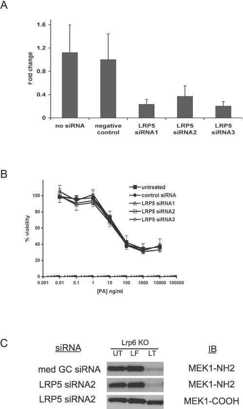 The Effect of Lrp5 Knockdown upon PA-Dependent Uptake of FP59 and Anthrax LF in Lrp6−/− MEFs(A) The efficacy with which LRP5-specific siRNA knocked down target gene expression was measured by qPCR. Results are presented as an average of two independent samples, each of which was run in duplicate. The error bars indicate the standard deviation.(B) The effect of Lrp5 knockdown on cell sensitivity to PA plus FP59 (1 ng/ml) was assessed in Lrp6−/− MEFs using toxicity assays as described in Materials and Methods. Cell viability (oordinate) at the end of 24 h of incubation is plotted versus the concentration of PA (abcissa). Error bars indicate standard deviation between two independent experiments, each of which was run in quadruplicate.(C) As an independent indicator of PA-mediated entry into the siRNA-treated CHO cells, cleavage of MEK1 was assessed by immunoblotting with antibodies that are specific for the NH2-terminus of MEK1. Only representative data for negative control siRNA (med GC) and LRP5 siRNA2 are shown, though identical results were obtained for LRP5 siRNA 1 and 3. An immunoblot with an antibody against the carboxy-terminus of MEK1 (MEK1-COOH) is shown as a control for loading and protein degradation.