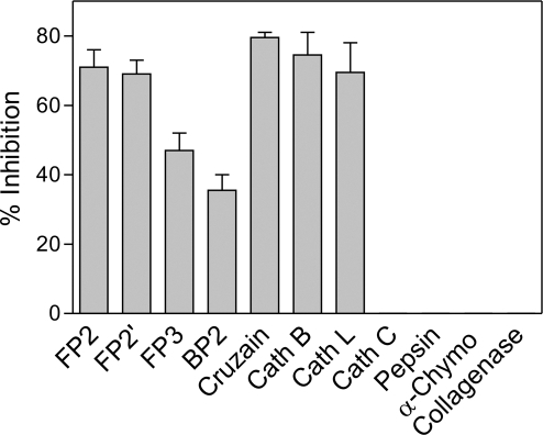 Inhibition of different proteases by the prodomain of falcipain-2.The inhibition of falcipain-2 (FP2), falcipain-2′ (FP2′), falcipain-3 (FP3), berghepain-2 (BP2), cruzain, human cathepsin B (Cath B), human cathepsin L (Cath L), bovine cathepsin C (Cath C), pepsin, α-chymotrypsin (α-Chymo), and collagenase was measured as described in Experimental Procedures. In each case activity was measured with and without the prodomain and the percentage inhibition calculated. Error bars represent standard deviations from two experiments, each performed in duplicate.