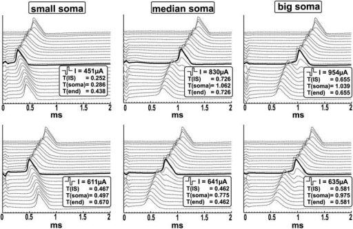 Biphasic threshold stimulation by E3 of three neurons with different soma size. The traveling APs (lines from top to bottom correspond to the transmembrane potential of every compartment from the peripheral to the central end) are simulated for the smallest (d = 10.05 μm), mean value (d = 19.08 μm) and biggest detected cell (d = 25.05 μm).