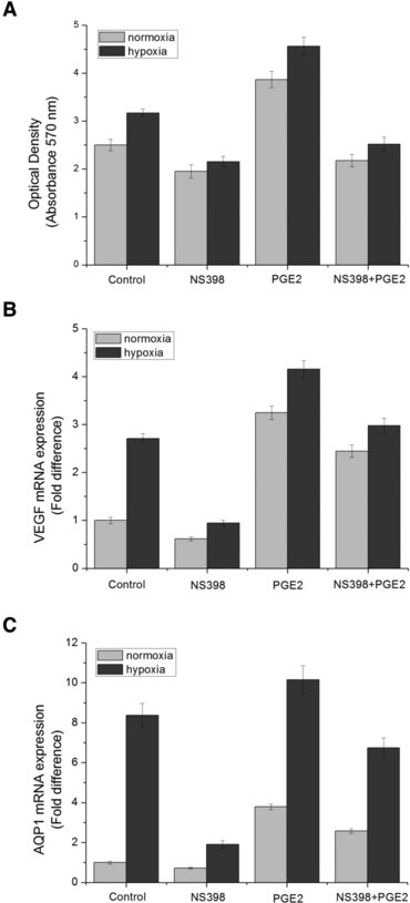 Effect of NS398, exogenous PGE2 and combinational treatment of NS398 and exogenous PGE2 on cell viability and VEGF, AQP1 mRNA transcription of HUVECs under normoxia or hypoxia. HUVECs were treated with 10 μM of NS398 and/or 10 μM of exogenous PGE2 under normoxia or hypoxia for 3 hrs. Cells without NS398 or exogenous PGE2 treatment served as control. (A) HUVECs proliferation and viability was measured by MTT assay. (B) VEGF mRNA level assessed by real-time RT-PCR experiment. (C) AQP1 mRNA level assessed by real-time RT-PCR experiment. *P < 0.05 and **P < 0.01 versus control.
