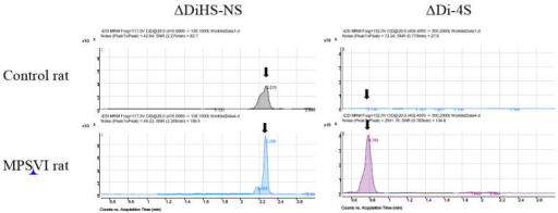 Chromatograms of urine ΔDiHS-NS and ΔDi-4S from the rat with MPS VI and the age-matched control ratΔDi-4S (DS) in MPS VI rat is markedly elevated, compared with that in age-matched control rat.