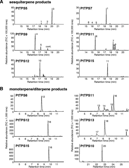 GC-MS analysis of sesquiterpenes(A),monoterpenes and diterpenes(B)produced by recombinant PtTPS5,PtTPS6,PtTPS7,PtTPS9,PtTPS10,PtTPS11,PtTPS12,PtTPS13 and PtTPS15. The enzymes were expressed in E. coli, extracted, partially purified, and incubated with the substrates FPP, GPP and GGPP. Products were collected with a solid-phase microextraction (SPME) fiber and analyzed by GC-MS. 1, elemol; 2, β-eudesmol*; 3, unidentified sesquiterpene alcohol; 4, (E)-β-caryophyllene*; 5, α-humulene*; 6, β-elemene*; 7, eremophilene; 8, α-selinene*; 9, unidentified sesquiterpene; 10, γ-curcumene*; 11, nerolidol*; 12, (E)-β-ocimene*; 13, myrcene*; 14, limonene*; 15, terpinolene*; 16, linalool*; 17, sabinene*; 18, 1,8-cineole*; 19, terpineol*; 20, geranyllinalool*; cont., contamination. Compounds marked with * were identified using authentic standards.