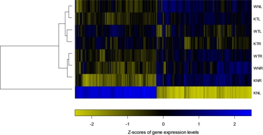 The heatmap representing the relative expression level of each DEG over eight sample groups.In the heatmap, color indicates the Z-score of expression relative to the mean over eight conditions. Eight conditions were clustered using hierarchical clustering.