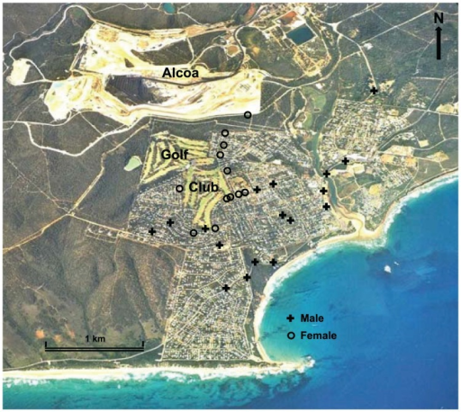 Aerial photograph of Anglesea, Victoria, Australia, showing the compact residential area bounded by the Anglesea Heath, the Anglesea Golf Club (Golf) within the town boundary, and the Alcoa Australia coal mine and power station (Alcoa) to the north of the town. Also shows locations of road-kills of tagged male and female Eastern Grey Kangaroos Macropus giganteus reported from 2008 to 2013.