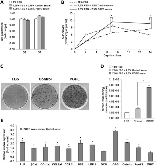 Osteoblast viability, differentiation and transcription in culture, after exposure to serum harvested from mice raised either under control conditions or treated with pomegranate peel extract. * p < 0.05 PGPE versus Control condition. (A) Cell proliferation test performed on MC3T3-E1 cells cultured in minimal medium (2% Fetal Bovine Serum, FBS), supplemented with serum from mice given either physiological serum (1.25% FBS + 0.75 Control mice serum) or pomegranate peel extract, PGPE (1.25% FBS + 0.75 PGPE mice serum), after 2 and 7 days of treatment. Results are expressed as mean ± standard error of the mean (SEM) (n = 6). (B) Alkaline phosphatase, ALP activity of MC3T3-E1 cells cultured in optimized medium with 10% FBS or with 7.5% FBS + 2.5% serum from mice fed either physiological serum (Control) or pomegranate peel extract (PGPE), after 0, 2, 7 and 14 days of treatment. Results are expressed as mean ± SEM (n = 8). (C,D) Mineralized nodules stained with alizarin red S on Day 21 in MC3T3-E1 cells cultured in optimized (C+) medium with 10% FBS or with 7.5% FBS + 2.5% serum from mice exposed to either physiological serum (Control) or pomegranate peel extract (PGPE). (C) Representative image of alizarin red staining for each condition. (D) Relative quantification of alizarin red staining with picture analyser software ImageJ. Results are presented as mean ± standard deviation, SD (n = 6). (E) Transcriptomic analysis of the main osteoblast markers in MC3T3-E1 cells cultured in optimized medium after 7 days of treatment with serum from mice exposed to either physiological serum (Control) or pomegranate peel extract (PGPE). Transcriptomic analysis of MC3T3-E1 mRNA levels determined by Taqman Low-Density Arrays are presented as fold change compared to the Control condition (fold change = 1) as mean ± SD (n = 6). Genes: ALP: alkaline phosphatase; βCat: β-catenin;Coll1a1: collagen 1a1; Coll2a1: collagen 2a1; DDR2: discoidin domain receptor 2; BSP: bone sialoprotein; Lrp5; OCN: osteocalcin; OPG: osteoprotegerin; osteri RunX2 and Wnt.