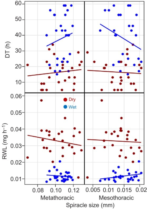 Effects of spiracle size on DT and RWL under the two treatments. Spiracle size was measured as the length of the mesothoracic and metathoracic spiracles. Regression lines have been added to convey trends although the relationships are not statistically significant (see Results). Ndry=26 and Nwet=28.