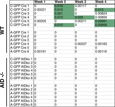 C-GFP and A-GFP clones in an AID-deficient background. Six transgenic clones each from Cre DT40 or AID−/− Cre DT40 lines were monitored for GFP+ cells by flow cytometry. The 24 subclones were analyzed by FACS weekly for 4 wk. Green boxes are as in Fig. 3.