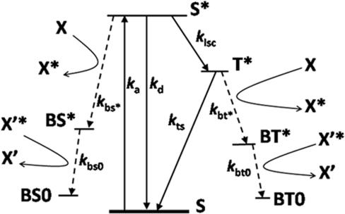 Jablonski energy diagram for the formation of radicals open i jablonski energy diagram for the formation of radicals through bleaching of a generic flourophore s ccuart Images