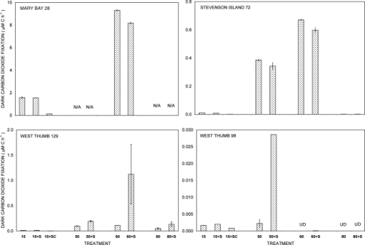 Dark carbon dioxide fixation by Yellowstone Lake hydrothermal vent samples measured in triplicate (15°C) or duplicate incubations (50, 60, and 80°C) with (+S) or without addition of 5 mM thiosulfate. Biological fixation controls with added S + 20 μg/mL chloramphenicol (SC) were tested at 15°C only. UD, undetectable (<0.0005 μM C h−1); N/A, not available.