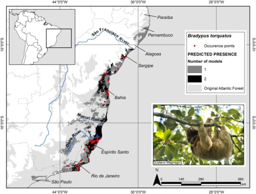 Potential geographic distribution of the maned sloth (Bradypus torquatus) in the Atlantic Forest.The potential geographic distribution of the maned sloth in the Atlantic Forest based on the binary ensemble model of Maxent and Mahalanobis Distance algorithm. The occurrence points used in the modeling are also shown in the map. Cartographic base: [79], Geographic Projection: Datum WGS 1984.