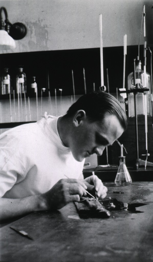 <p>Seated at laboratory table engaged in scientific work.  White coat.  Right profile.</p>