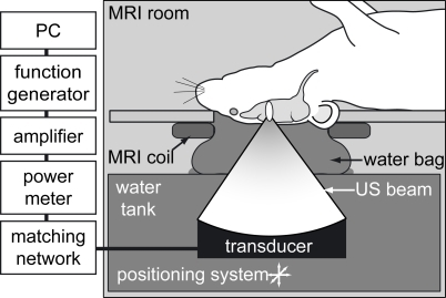 Schematic of focused ultrasound system.Mice were pd | Open-i