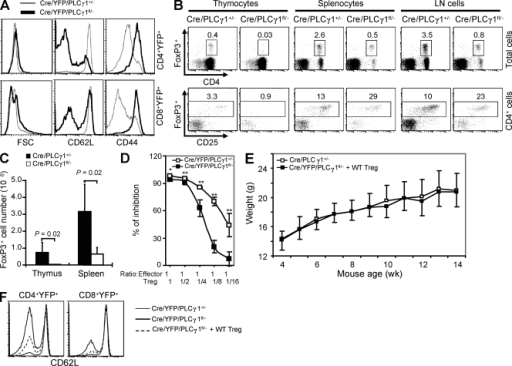 PLCγ1 deficiency impairs T reg cell development and function. (A) PLCγ1-deficient T cells display activated phenotype. Data are representative of four pairs of mice. (B) Percentages of FoxP3+ T reg cells in total and CD4-gated lymphocytes in the thymus, spleen, and lymph node cells. Data represent five pairs of mice. (C) CD4+FoxP3+ cell numbers were reduced in thymus and spleen of Cre/PLCγ1fl/− mice. Data represent five pairs of mice. (D) PLCγ1 deficiency impairs the inhibitory functions of T reg cells. Error bars represent the standard deviation of triplicate measurements of each data point. *: P < 0.05, **: P < 0.01. Data are representative of two independent experiments. (E) WT T reg cell reconstitution restores normal weight gain in Cre/PLCγ1fl/− mice. Each point represents the mean weight of 7 to 14 female Cre/PLCγ1+/− mice or 6 female Cre/PLCγ1fl/− mice that received WT T reg cells. (F) WT T reg cell reconstitution restores high CD62L expression on PLCγ1-deficient T cells. Data represent three independent experiments.