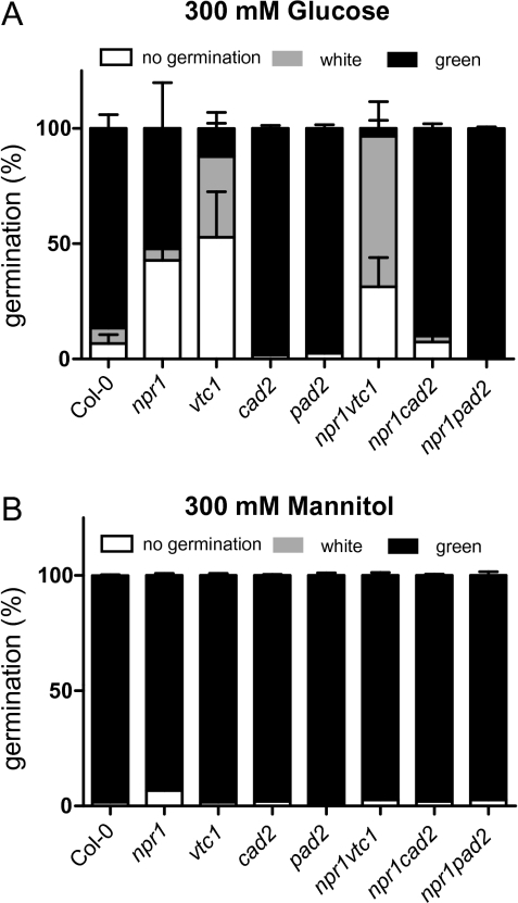 Sugar inhibition of germination. The germination frequency of seeds from antioxidant mutants grown on MS media supplemented with 300 mM glucose (A) or 300 m M mannitol (B) for 7 d. Seeds were scored in three different categories: no germination, white seedlings, and green seedlings. Values are the mean ±SE of three biological repeats. n=150–300.