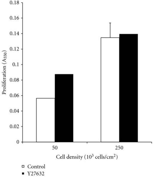 SW620 cells were seeded at densities of 50 × 103 and 250 × 103 cells/cm2 onto 1.5 mg/mL collagen I gels. Scaffolds were treated with Y-27632 to study the impact of ROCK-1 inhibition on cell proliferation in a low- and high-density environment. Treatment with Y-27632 resulted in a modest increase in cell proliferation for cells seeded at 50 × 103 cells/cm2 and no significant change for those seeded at 250 × 103 cells/cm2. Furthermore, increasing cell density increased cell proliferation 2.5-fold for the untreated condition and 1.5-fold for those treated with Y-27632.