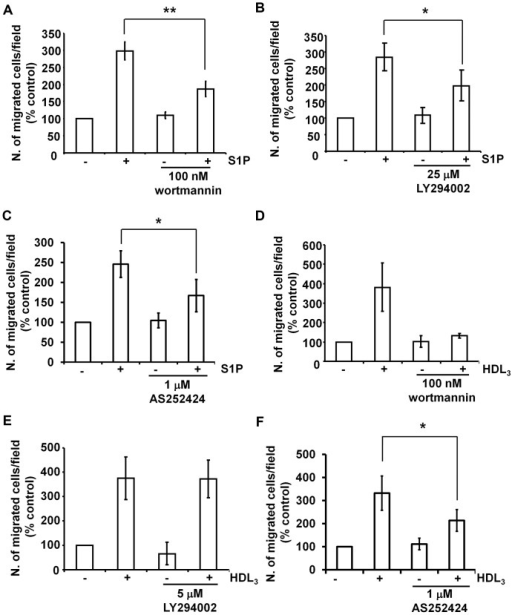 Effect of PI3K inhibitors on S1P- and HDL3-induced EC migration.Serum-starved HUVEC were pre-treated with 100 nM wortmannin (A,D), 25 µM LY294002 (B), 5 µM LY294002 (E) or 1 µM AS252424 (C,F) for 30 min. Cell migration induced by S1P (A–C) or HDL3 (D-F) was determined by Transwell assays. Briefly, cells resuspended in the presence or absence of the specific inhibitor (or vehicle control) were allowed to migrate in the presence of 1 µM S1P or 200 µg/ml HDL3 in the lower chamber for 4 h. Where necessary, each inhibitor was also added in the lower chamber therefore migration was performed in the continuous presence of the inhibitor to be tested. After 4 h, migrated cells were fixed with 4% paraformaldehyde, stained with 1% crystal violet and counted using a phase-contrast microscopy. Data are expressed as percentage of control (cells untreated and unstimulated) and are means ± SEM from 12 (A), 6 (B), 7 (C), 4 (D), 3 (E) and 5 (F) independent experiments. *p<0.05, **p<0.001.