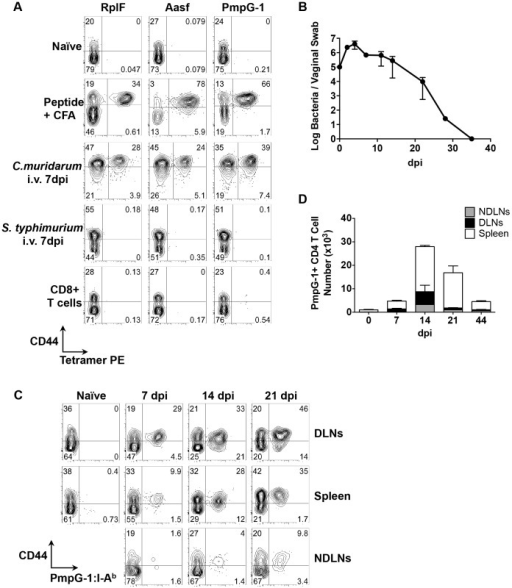 Kinetics of antigen-specific CD4+ T cell expansion after C. muridarum intravaginal (i.vag.) infection.(A) C57BL/6 mice were immunized subcutaneously with 100 µg of C. muridarum peptide (RplF51–59, Aasf24–32 or PmpG-1303–311) in the presence of CFA or infected intravenously with either 1×105C. muridarum or 5×105S. typhimurium. Seven days post immunization/infection, axillary, brachial and inguinal lymph nodes were isolated from peptide-immunized mice, spleen and lymph nodes were harvested from C. muridarum or S. Typhimurium infected mice and endogenous RplF, Aasf or PmpG-1-specific CD4 T cells were detected with RplF51–59:I-Ab, Aasf24–32:I-Ab or PmpG-1303–311:I-Ab tetramers, respectively. FACS plots showing representative results of tetramer staining after fluorescent microbeads enrichment. All plots were pre-gated on CD11b−CD11c−F4/80−B220−CD3+CD4+ cells except CD8+ T cells (bottom row), which were gated on CD11b−CD11c−F4/80−B220−CD3+CD8+ cells. (B–D) C57BL/6 mice were infected i.vag. with 1×105C. muridarum. (B) At various time points post infection, bacteria burden at lower genital tract was measured by vaginal swabs. (C) Endogenous PmpG-1-specific CD4 T cells in the spleen, draining lymph nodes and non-draining lymph nodes were detected by PmpG-1303–311:I-Ab tetramers. FACS plots showing representative results of tetramer staining after magnetic enrichment at day 0, 7, 14 and 21 days post infection. All plots were pre-gated on CD11b−CD11c−F4/80−B220−CD3+CD4+ cells. (D) Total cell number of endogenous PmpG-1-specific CD4 T cells calculated based on FACS analysis. Data shown are representative results from two independent experiments with three to five mice per time point. Bar graphs show mean number ± SEM.