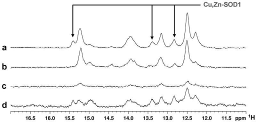 Cu(II) addition to the culture medium induces Cu(I) binding to a fraction of cytoplasmic SOD1Histidine region of 1H NMR spectra were acquired on human cells expressing unlabelled SOD1: a, in Zn(II)-supplemented medium, after incubation with Cu(II); b, in Zn(II)-supplemented medium without incubation with Cu(II); c, in medium without added metals. d, 1H NMR spectrum of human cells co-expressing SOD1 and CCS in Zn(II)-supplemented medium, after incubation with Cu(II). Histidine protons unambiguously assigned to Cu(I),Zn-SOD1 species are indicated.