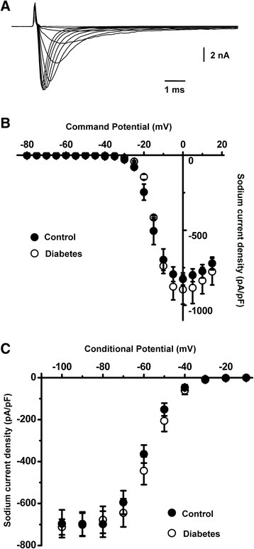 Total voltage-gated Na+ current is not significantly changed in the caps−lpH+ neurons of diabetic rats. a A representative example of Na+ currents obtained using a voltage-dependent activation protocol. b Steady-state activation curves of Na+ current in the caps−lpH+ neurons of diabetic and control rats. c Steady-state inactivation curves of Na+ current in the caps−lpH+ neurons of diabetic and control rats. n = 7 from three rats for diabetic and control groups in B and C. Differences in peak current densities were insignificant (p > 0.05). These results clearly demonstrate a lack of Na+ current modulation under diabetic conditions