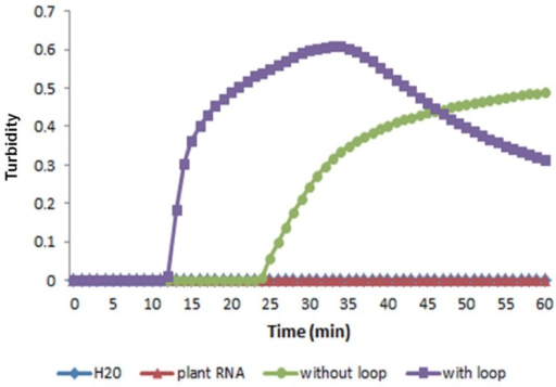 Effect of loop primers on RT-LAMP amplification of the PVX CP gene. Real-time measurement of optical density with a real-time turbidimeter was used to monitor RT-LAMP amplification with or without loop primers.