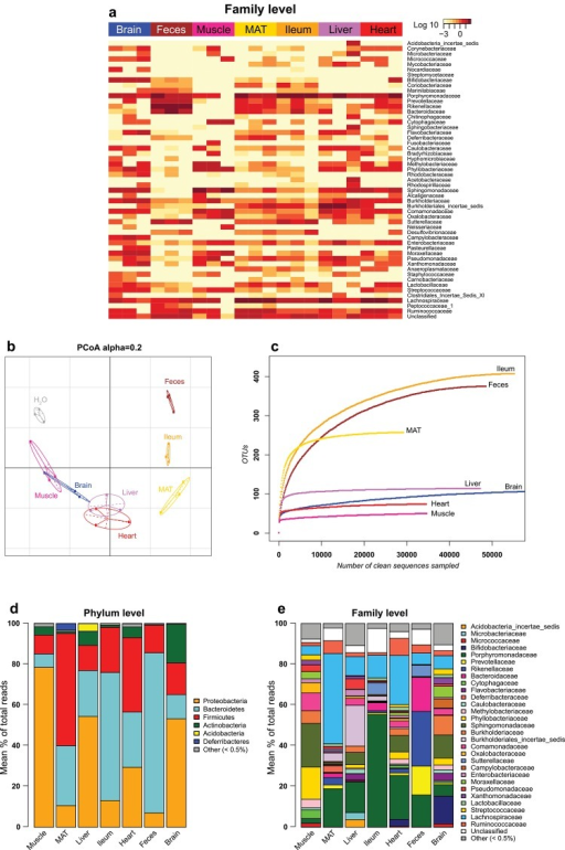 16S metagenomics on diverse tissue samples.(a) Heatmap of the relative abundance of each bacterial family from sequencing of different mouse tissue samples performed in triplicate (three different mice for each tissue). Each line corresponds to a bacterial family; each one of the three columns for a tissue corresponds to a different mouse. (b) Generalized UniFrac distance-based PCoA analysis of sequencing data from the samples shown in a compared with the negative control generated by sequencing molecular biology-grade water with the same pipeline (H2O). UniFrac weight parameter (Alpha) was set to 0.2 for this analysis. (c) Rarefaction curve of the sequencing of the samples shown in a and b. For each tissue, only the sample with the median number of OTU is displayed. (d) Stacked bar charts showing the relative abundance of bacterial phyla obtained by sequencing of the mouse samples shown in a, b and c. (e) The relative abundance as in d, but at the family taxonomic level. MAT: Mesenteric adipose tissue. OTU: Operational Taxonomic Unit.