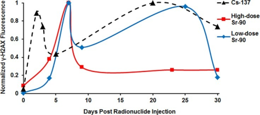 Median response pattern of γ-H2AX yields in peripheral blood mouse lymphocytes following 30-day internal exposures to 137Cs (dashed black line), high-dose 90Sr (solid red line) and low-dose 90Sr (solid blue line).The curves connecting the points are splines shown for convenience only, to guide the eye.