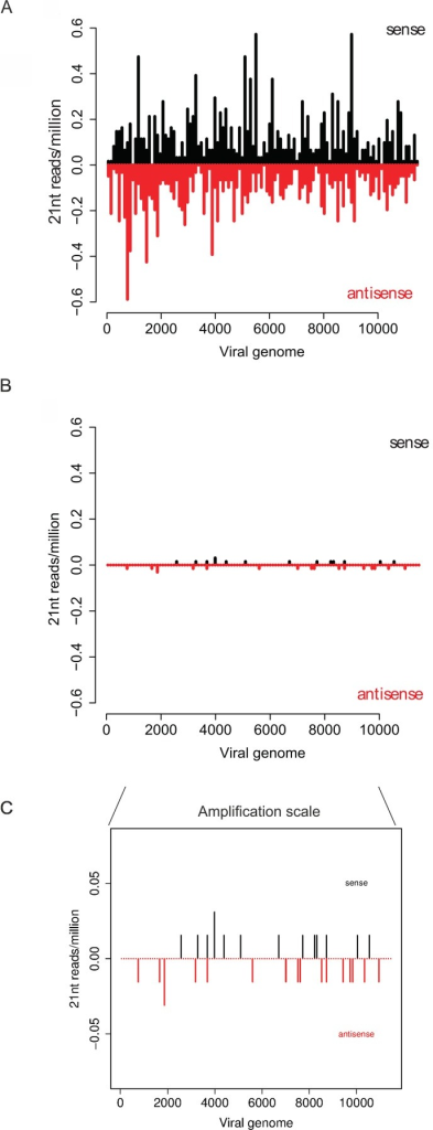 The effect of Wolbachia on the distrubution of virus-derived 21nt interfering RNAs in Jw18 cells.Distribution of 21 nt long viRNAs along sense (upper bars, black; 5'-3' orientation) or antisense (lower bars, red; 3′-5′ orientation) strands of the SFV genome in the absence (A) (Jw18Free) or presence (B) (Jw18Wol) of Wolbachia. A zoomed in version of (B) is shown in (C) for ease of comparison. Data are from 24 hpi with SFV4(3H)-RLuc, of Jw18 D. melanogaster cells. Concatenated data from 5 independent infections are shown in all panels.