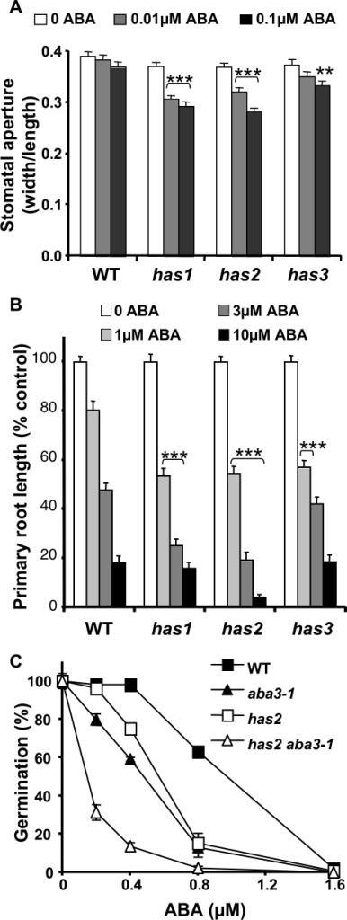 has mutants show ABA-hypersensitivity compared to wild-type.A, Induction of stomatal closure by ABA in wild-type and has mutants. Stomata aperture ratios (width/length) were measured after a 2 h pre-treatment in the light in stomata opening solution followed by a 3 h incubation with or without ABA at the concentrations indicated. Data are means ± SE of 3 independent experiments with 40 apertures measured per experiment and condition. Significance in Student t-tests comparing samples with and without ABA for the same genotype; **, p<1% or ***, p<0.1% level. B, ABA inhibition of root growth. Primary root length of 13 d old seedlings grown in long day photoperiod ABA was included in the growth media at the concentrations indicated. Error bars represent SE values (n = 24). Results presented are representative of those obtained in 2 independent experiments. C, ABA inhibition of seed germination after 7 d at 25°C. ABA was included in the growth media at the concentrations indicated. Germination was determined from the number of seedlings with green cotyledons compared to the total number of seeds sown. Error bars represent SE values (n = 3). Results presented are representative of those obtained in 2 independent experiments. Significance in Student t-test when comparing mutant and wild-type at a given ABA concentration, p<0.1%, ***. WT, wild-type.
