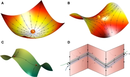 Landscape metaphors for brain dynamics (A–C). (A) Representation of a simple attractor (stable fixed point) in the phase space of a dynamical system. (B) Representation of a metastable state (saddle fixed point) with two stable and two unstable separatrices (a separatrix is a surface or curve that refers to the boundary separating two modes of behavior in the phase space of a dynamical system). (C) Representation of a simple heteroclinic chain with two connected metastable states. (D) Representation of a stable heteroclinic channel – robust sequence of metastable states.