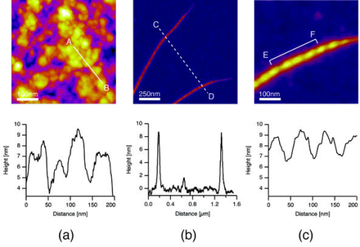 AFM images of pLT and pLT/SWCNT complexes. (a) AFM image of pLT and the height distribution along line A-B. PLT folded to form sphere-like structures on the surface of an Si substrate. (b) AFM image of pLT/SWCNT complexes and the height distribution along line C-D. (c) AFM image of a pLT/SWCNT complex and the height distribution along line E-F. The thicknesses of pLT adsorbed onto the SWCNT varied cyclically in the axial direction of the SWCNT.