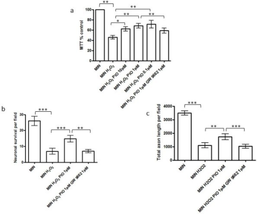 Effect of pioglitazone on hydrogen peroxide-mediated reductions in neuronal survival in cortical neuronal culture. (a) The effect of hydrogen peroxide exposure (MIN H2O2) (250 μM) on cortical neuronal viability in vitro compared to serum free minimal media (MIN) (**P < 0.01 compared with MIN); the effect of pioglitazone (0.1 μM to 10 μM; MIN H2O2 PIO) on cortical neuronal viability exposed to H2O2 (*P < 0.05 and **P < 0.01 as compared with MIN H2O2); and the effect of the PPAR-γ antagonist, GW9662 (1 μM) on pioglitazone-induced neuroprotection from H2O2 (**P < 0.01 comparing MIN H2O2 Pio 1 μM GW9662 1 μM with MIN H2O2 Pio 1 μM). Cultures were treated with GW9662 for 1 hour prior to incubation with pioglitazone for 1 hour followed by exposure to hydrogen peroxide. Cell viability was assessed by MTT assay. Data are expressed as percentage of cells grown in MIN medium. Statistical significance was obtained by one-way ANOVA followed by Bonferroni post-hoc test. (b) Effect of hydrogen peroxide exposure (250 μM; MIN H2O2) on cortical neuronal cell survival (number of βIII-tubulin cells per field; ***P < 0.001 as compared with MIN, Student's t-test); the effect of pioglitazone (1 μM) on cortical neuronal survival exposed to H2O2 (***P < 0.001 compared with MIN H2O2); and the effect of the PPAR-γ antagonist, GW9662 (1 μM) on pioglitazone-induced neuroprotection from H2O2 (**P < 0.01 comparing MIN H2O2 Pio 1 μM GW9662 1 μM with MIN H2O2 Pio 1 μM). (c) Effect of hydrogen peroxide exposure (250 μM H2O2) on axon length within neuronal cultures (determined by SMI312 staining; ***P < 0.001 as compared with MIN, Student's t-test); the effect of pioglitazone (1 μM) on axon length in neurons exposed to H2O2 (**P < 0.01 compared with MIN H2O2); and the effect of the PPAR-γ antagonist, GW9662 (1 μM) on pioglitazone-induced axon protection from H2O2 (***P < 0.001 comparing MIN H2O2 Pio 1 μM GW9662 1 μM with MIN H2O2 Pio 1 μM). Values represent the mean ± SEM from at least three separate experiments. ANOVA, analysis of variance; MTT, 3-(4,5-dimethyl-thiazol-2-yl)-2,5-diphenyltetrazolium bromide; PPAR-γ, peroxisomal proliferator activated receptor γ; SEM, standard error of the mean. To further examine the neuroprotective properties of pioglitazone, neurons were exposed to identical test conditions and cultures were then fixed and stained for βIII tubulin, SMI312 and the nuclear marker DAPI. The numbers of viable neurons (determined by nuclear appearance) expressing βIII tubulin were counted for each condition. As expected, neuronal survival was significantly increased following exposure to pioglitazone (1 μM) (Figure 4b). In addition, we examined the influence of pioglitazone on axonal morphology in these cultures. Neurofilament phosphorylation, as identified by the antibody SMI312, was examined as a marker of axonal integrity and length. Pre-treatment with pioglitazone (1 μM) caused a significant increase in total axon survival (Figure 4c). Pre-treatment with GW9662 led to a significant reduction in the neuroprotective (Figure 4b) and axonoprotective (Figure 4c) effects of pioglitazone. To determine further the role of catalase in pioglitazone-induced neuroprotection, we pre-incubated the cultures with the catalase inhibitor 3-amino triazole (10 mM) (3-AT) for 1 hour, prior to incubation with H2O2 (250 μM). The neuroprotective and axonoprotective effects of pioglitazone were attenuated by the addition of 3-AT (10 mM) (Figure 5a-5c). Furthermore, addition of exogenous catalase (100 U/ml) to cultures exposed to H2O2 improved neuronal survival (measured by MTT assay (Figure 5a) and neuronal morphology (Figure 5b) and axonal length within cultures (Figure 5c).