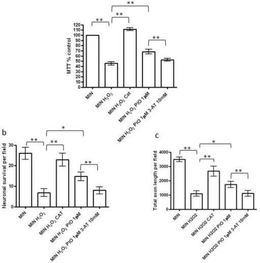 Inhibition of catalase activity attenuates pioglitazone-induced protection from H2O2 in cortical neuronal cultures. (a) The effect of hydrogen peroxide exposure (MIN H2O2; 250 μM) on cortical neuronal viability in vitro compared to serum free minimal media (MIN) (**P < 0.01 as compared with MIN); the effect of pioglitazone (1 μM) and the specific catalase inhibitor, 3-aminotriazole (3-AT) (10 mM) (**P < 0.01 MIN H2O2 compared to MIN H2O2 Pio 1 μM; and **P < 0.01 MIN H2O2 Pio 1 μM compared to MIN H2O2 Pio 1 μM 3-AT 10 mM) and the effect of catalase exposure (MIN H2O2 CAT; 100 U/ml) (**P < 0.01 MIN H2O2 compared to MIN H2O2 CAT) on cortical neuronal viability. Cultures were treated with pioglitazone for 1 hour prior to incubation with 3-AT for 1 hour followed by exposure to hydrogen peroxide. Cultures were treated with catalase for 1 hour prior to exposure to hydrogen peroxide. Cell viability was assessed by MTT assay. Data are expressed as percentage of cells grown in MIN medium. Statistical significance was obtained by one-way ANOVA followed by Bonferroni post-hoc test. (b) Effect of hydrogen peroxide exposure (250 μM H2O2) on cortical neuronal cell survival (number of βIII-tubulin cells per field; **P < 0.01 as compared with MIN, Student's t-test); the effect of pioglitazone (1 μM) on cortical neuronal viability exposed to H2O2 (*P < 0.05 compared with MIN H2O2); the effect of catalase exposure (MIN H2O2 CAT; 100 U/ml) (**P < 0.01 MIN H2O2 compared to MIN H2O2 CAT) and the effect of the specific catalase inhibitor, 3-AT (10 mM) on pioglitazone-induced neuroprotection from H2O2 (**P < 0.01 comparing MIN H2O2 Pio 1 μM with MIN H2O2 Pio 1 μM 3-AT 10 mM). (c) Effect of hydrogen peroxide exposure (250 μM H2O2) on axon length within neuronal cultures (determined by SMI312 staining; **P < 0.01 as compared with MIN, Student's t-test); the effect of pioglitazone (1 μM) on axon length in neurons exposed to H2O2 (*P < 0.05 compared with MIN H2O2); the effect of catalase exposure (MIN H2O2 CAT; 100 U/ml) (**P < 0.01 MIN H2O2 compared to MIN H2O2 CAT) and the effect of the specific catalase inhibitor, 3-AT, (10 mM) on pioglitazone-induced axon protection from H2O2 (**P < 0.01 comparing MIN H2O2 Pio 1 μM with MIN H2O2 Pio 1 μM 3-AT 10 mM). Values represent the mean ± SEM from at least three separate experiments. ANOVA, analysis of variance; MTT, 3-(4,5-dimethyl-thiazol-2-yl)-2,5-diphenyltetrazolium bromide; SEM, standard error of the mean.