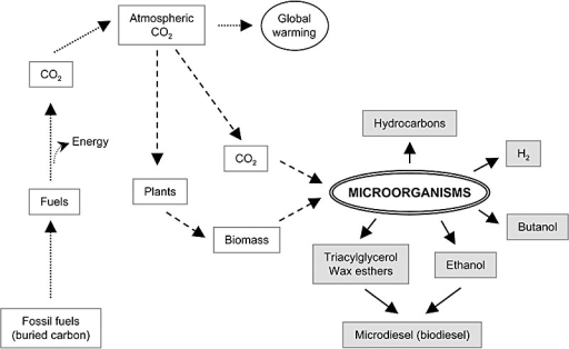 Biofuels generated by microorganisms. Burning of fossil fuels releases CO2 to the atmosphere, generating a net increase in the concentration of this gas and contributing to global warming (dotted lines). Part of this CO2 can be fixed by plants or by photosynthetic microorganisms (dashed lines). Some microorganisms, using either CO2 (photosynthetic) or biomass as carbon source, can generate a number of carbon compounds that are useful as fuels (shaded in grey). Burning of these biofuels is neutral for global warming, as the CO2 generated ultimately derives from CO2 previously fixed from the atmosphere by photosynthesis. A challenge of biotechnology is to allow producing these compounds in a sustainable and economically feasible way.