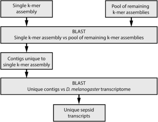 BLAST strategy to identify unique transcripts. Identification of unique transcripts in each individual assembly was performed by reserving contigs from one assembly and pooling all contigs from the remaining assemblies. The contigs from the single assembly were aligned to the pooled contigs. Contigs that fail to align were considered unique to that single assembly. The unique contigs were annotated by aligning to the D. melanogaster transcriptome.