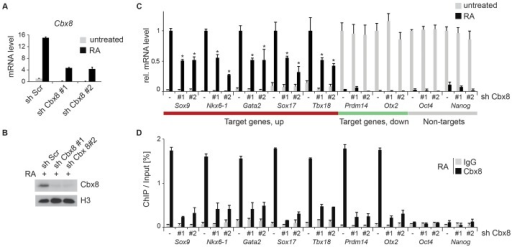 Knockdown of Cbx8 reduces transcription of activated target genes.(A) The mRNA levels of Cbx8 in control cells (sh Scr) and after shRNA-mediated knockdown of Cbx8 using lentiviral transduction of two independent hairpins (#1 and #2) were analyzed by qRT-PCR before and after treatment with RA. Error bars denote s.d., and n = 3. (B) Western blot analysis of Cbx8 in RA-treated ES cells. Histone H3 was used as loading control. (C) Transcript expression levels of genes in cells expressing Cbx8-specific shRNAs or control shRNA (indicated by minus) were analyzed. Color code of target genes is according to Figs. 1F and 2B. For each gene, values are plotted relatively to control treated with RA. Error bars denote s.d.; n = 3; *, p<0.05 (comparing to RA-treated control). (D) The occupancy of Cbx8 on the same genes was analyzed by ChIP. Error bars denote s.d., and n = 3.